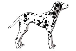 How to Draw a Dalmatian