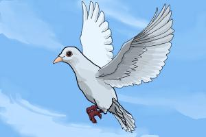 How to Draw a Dove