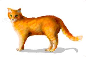 How to draw a ginger cat