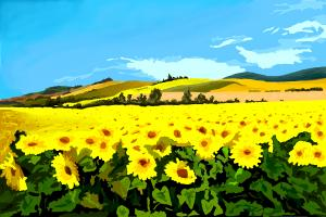 How to draw a landscape with sunflower's field