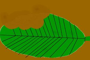 How to Draw a Leaf with Bite Marks