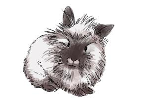 How to draw a Lionhead Bunny