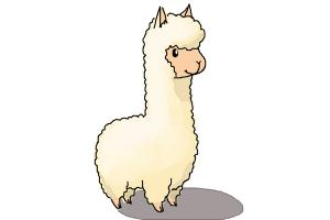 How to Draw a Llama For Kids