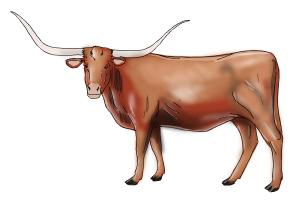 How to Draw a Longhorn
