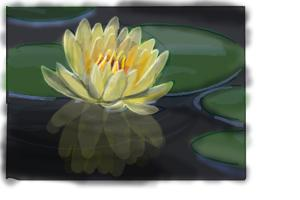 How to Draw a Lotus Flower, Water Lily