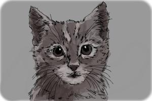 How to Draw a Realistic Kitten