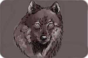 how to draw a realistic baby wolf