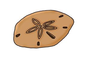 How to draw a sand dollar