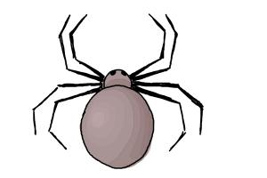 How to Draw a Simple Spider