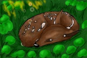 How to Draw a Sleeping Baby Deer