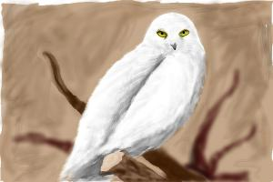 How to draw a snow owl