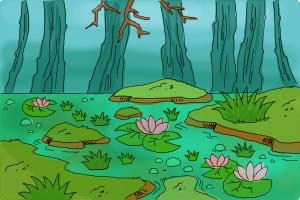 How to draw a Swamp