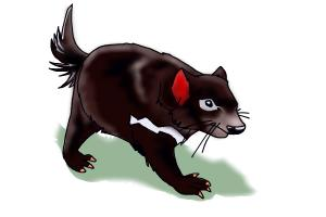 How to Draw a Tasmanian Devil