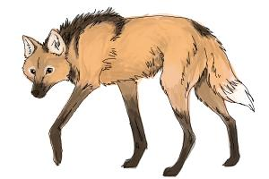 How to Draw a Wolf - Maned Wolf