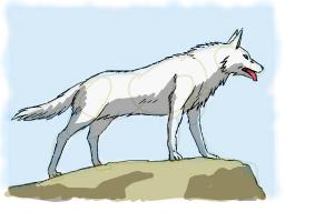 How to draw wolves step by step drawing lessons drawingnow how to draw an anime wolf ccuart Gallery