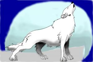 how to draw an artic wolf