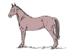 How to draw an easy horse