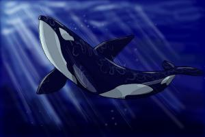 How to draw an Orca