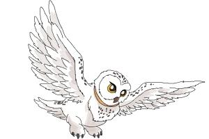 How to Draw Hedwig from Harry Potter
