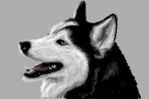 How to Draw Husky'S Head