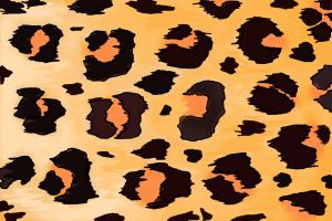 How to Draw Leopard Print