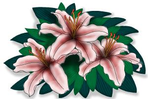 How to draw Lillies