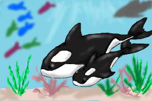 How to Draw Orcas/ Killer Whales