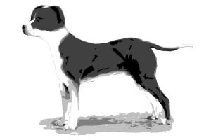 How to Draw Puppy (Female) Of American Staffordshire Terrier - My New Little Friend :)