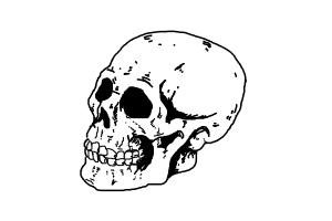 how to draw skull by Arijana
