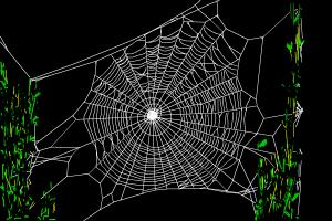 How to draw spiders' web