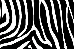 How to Draw Zebra Print