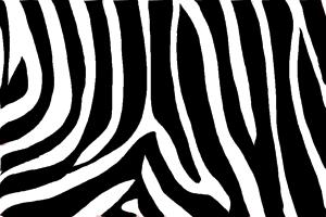 How to draw Zebra printHow to draw Zebra print