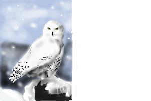 how to draw a snowy owl drawingnow