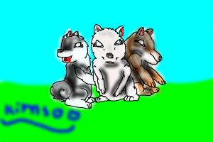 The Three Wolves In a Pack