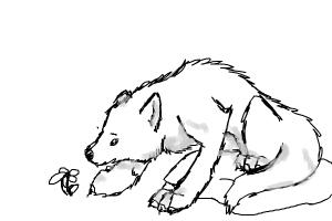 Wolf Looking At Flower