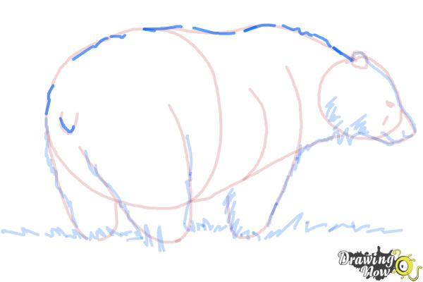 How to Draw a Black Bear - Step 10