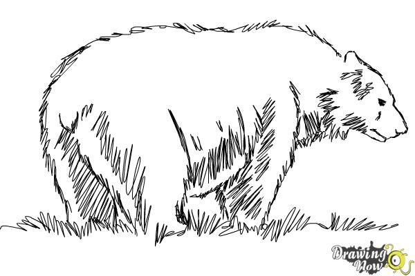 How to Draw a Black Bear - Step 11