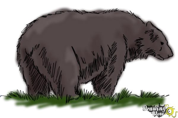 How to Draw a Black Bear - Step 12