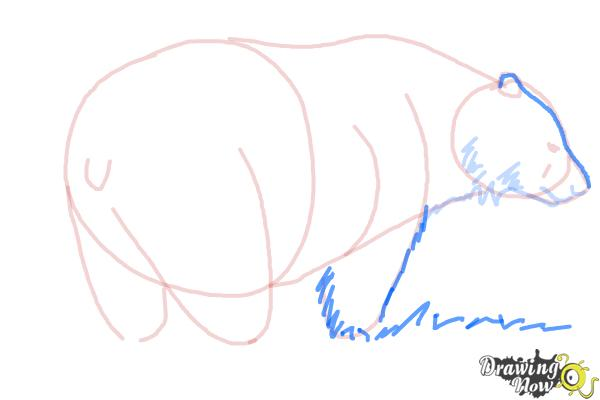 How to Draw a Black Bear - Step 8