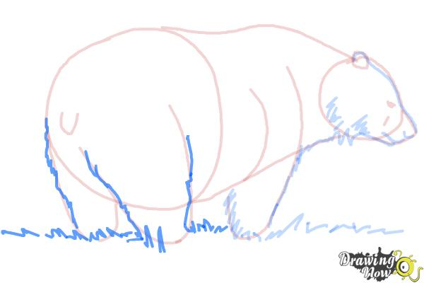 How to Draw a Black Bear - Step 9