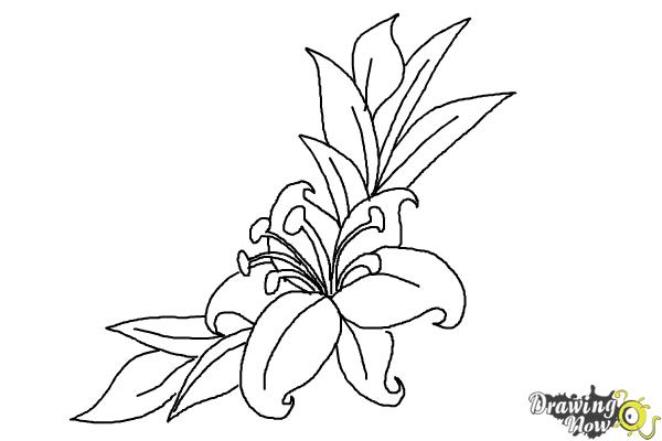 How to Draw a Beautiful Flower - Step 14