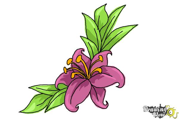 How To Draw A Beautiful Flower Drawingnow