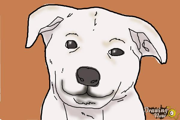 Line Drawing Of A Dog S Face : How to draw a dog face drawingnow