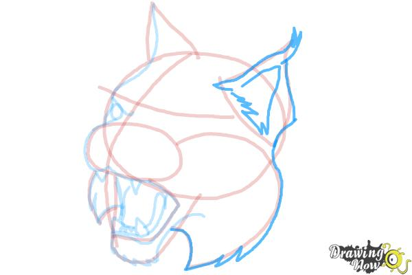 How to Draw a Bobcat - Step 10