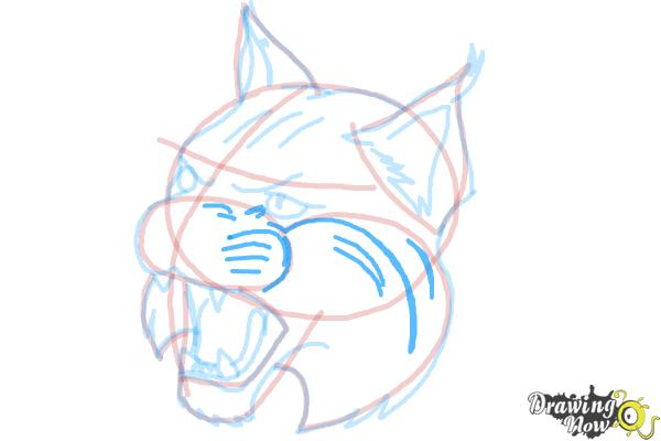How to Draw a Bobcat - Step 12