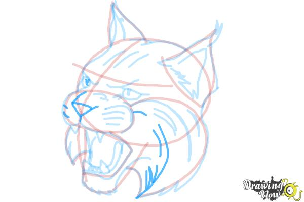 How to Draw a Bobcat - Step 13