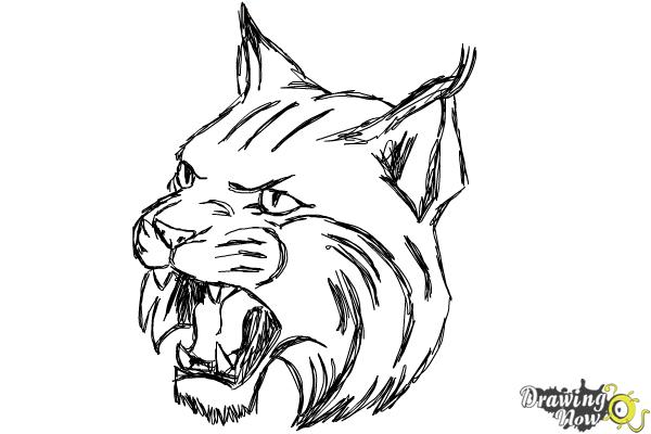 How to Draw a Bobcat - Step 14