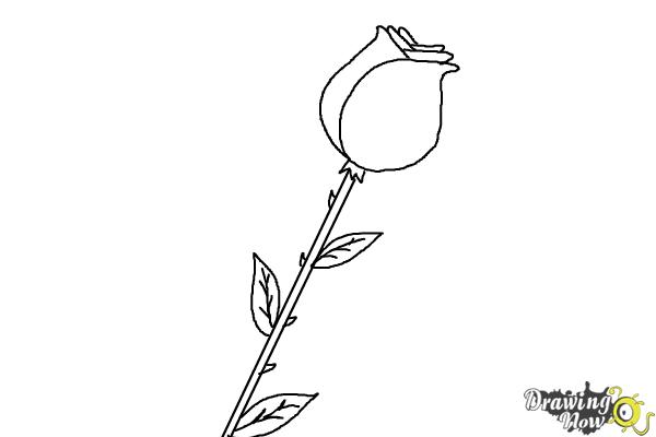 How to draw a rose for kids drawingnow for How to draw a rose bush step by step