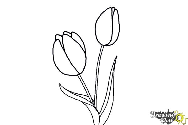 How To Draw A Tulip Drawingnow