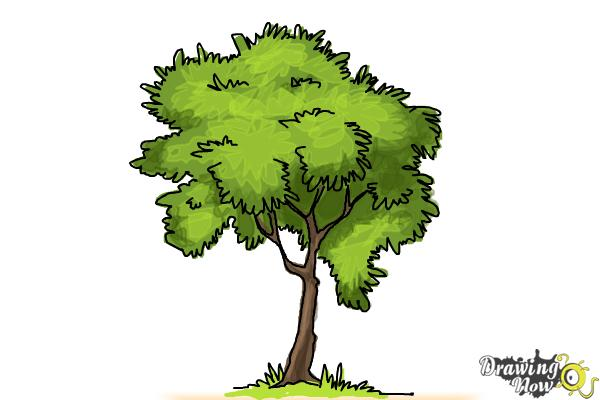 How to Draw a Simple Tree - Step 10